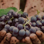 To Fine or Not to Fine, The Living Art of Natural Wine